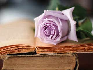 rose-books-mood-wallpaper-320x240
